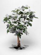 money-tree-istock-225x300